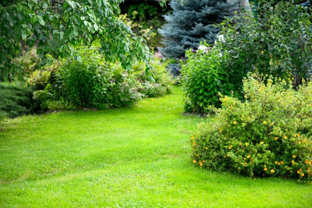 园林草坪摄影
