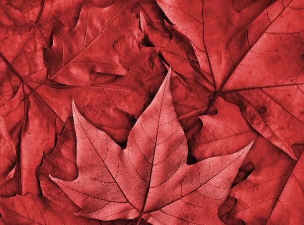 干的秋天叶子