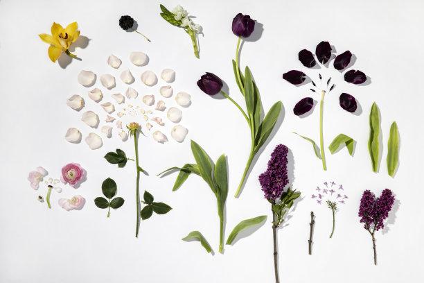 白色背景花瓣花束