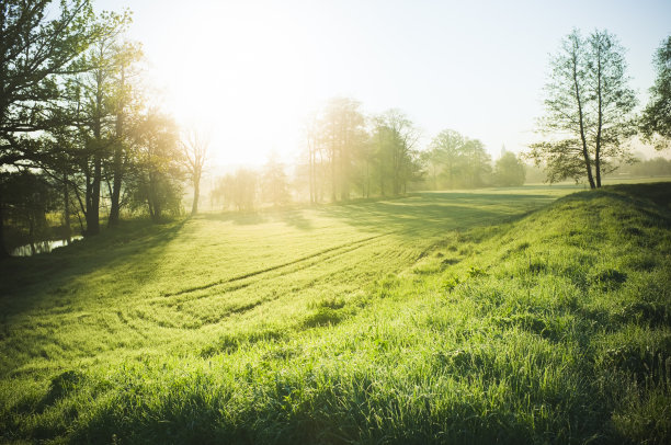 自然自然美草地