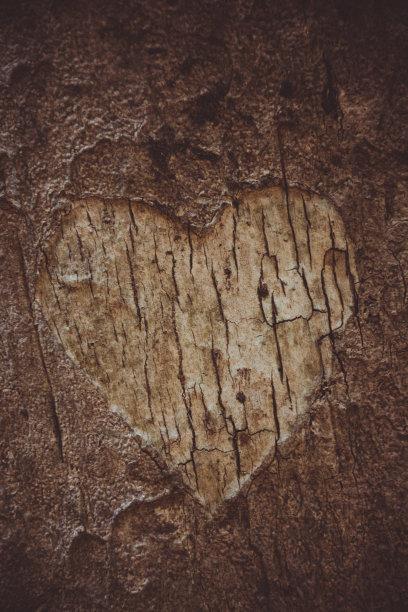 心型树皮树干