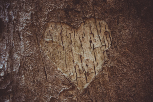 心型树皮疤