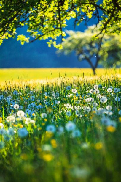 草地春天阿尔卑斯山脉