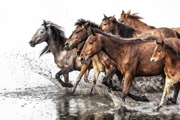 马野外动物兽群