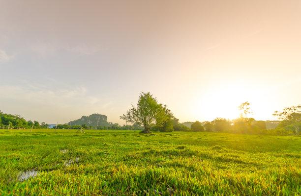 草地夏天金色