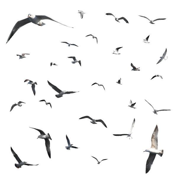 姿态各异的海鸥