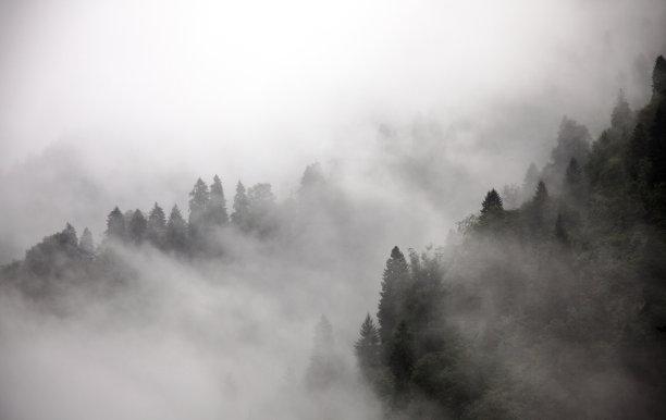 雾森林气候与心情