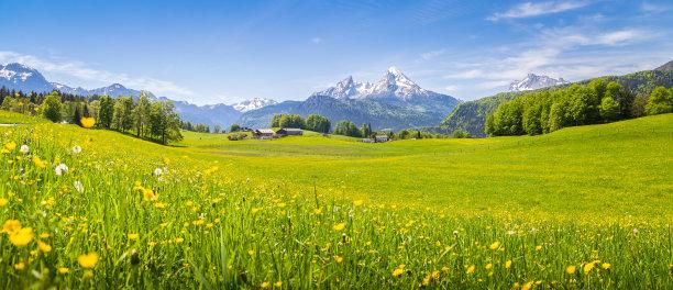 阿尔卑斯山下的草地