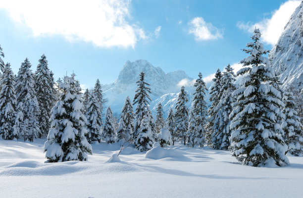 雪地林风景