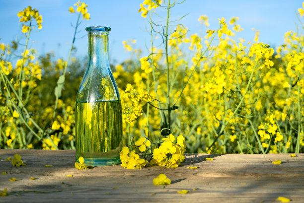 油菜花农作物瓶子