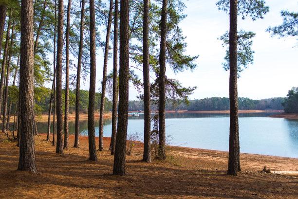 森林自然保护区自然荒野区