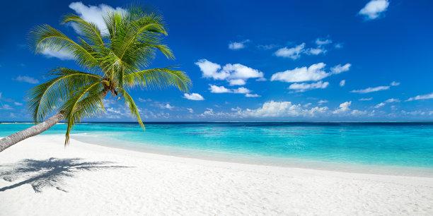 海滩上的椰子树