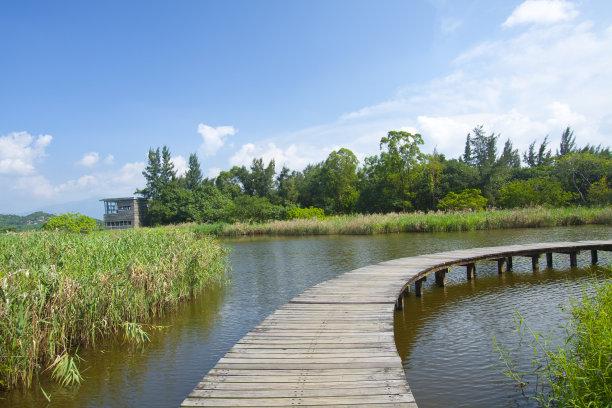 公园湿地水