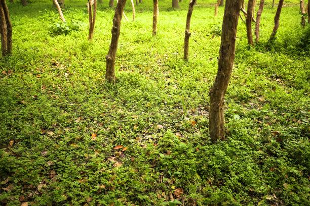 自然绿色森林