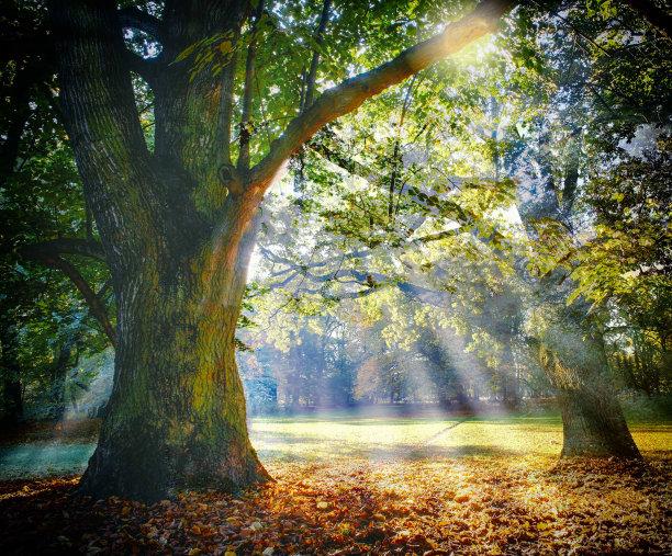 树林阳光光束
