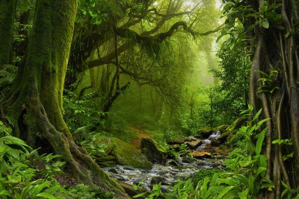 热带雨林雨林亚马逊雨林