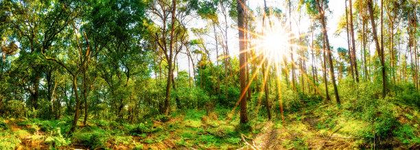日光森林林间空地