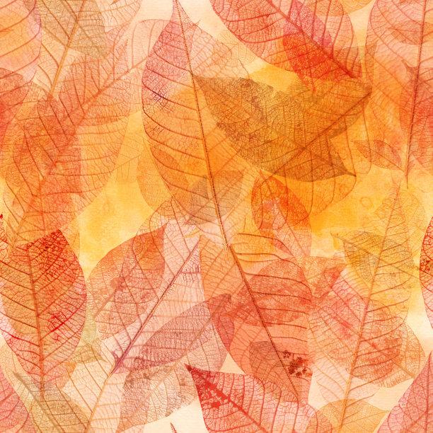 叶子经脉背景