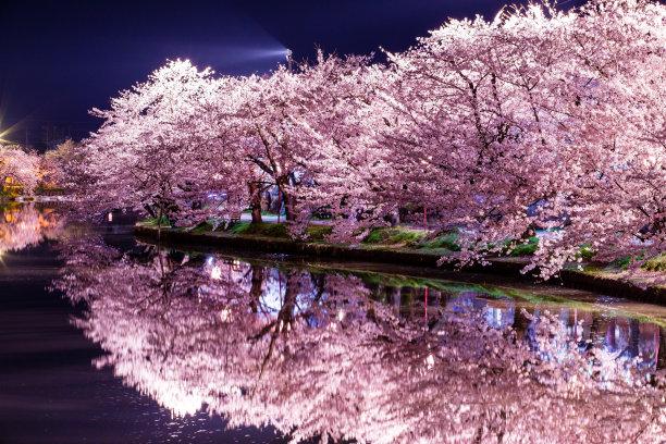 弘前城堡樱之花