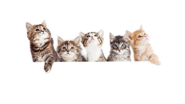 小猫手写板