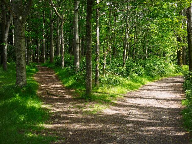 两个物体森林路