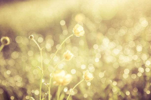 柔焦夏天黄金