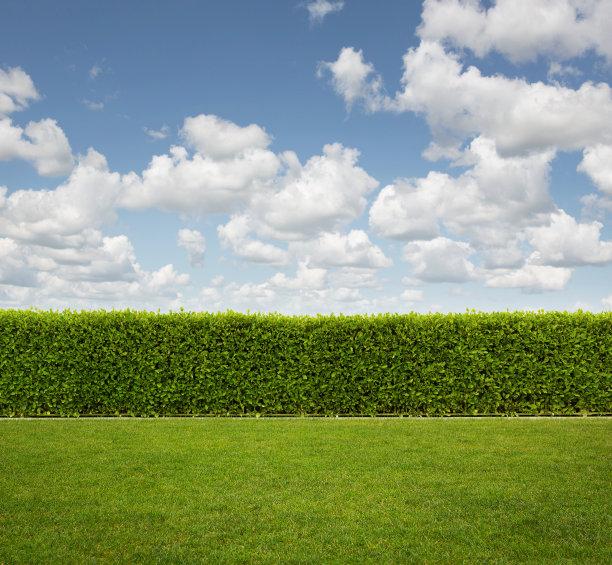后院树篱和草坪