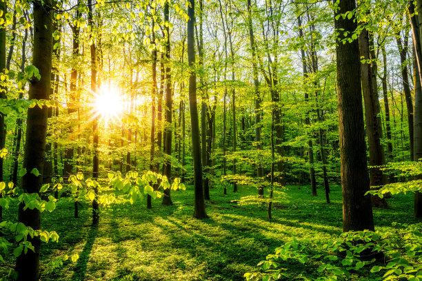 森林自然美林间空地