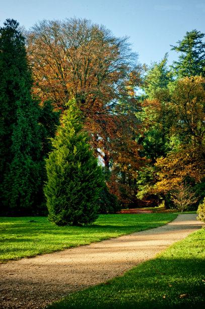 秋天,风景,垂直画幅