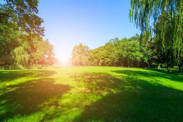 天空,草,公园