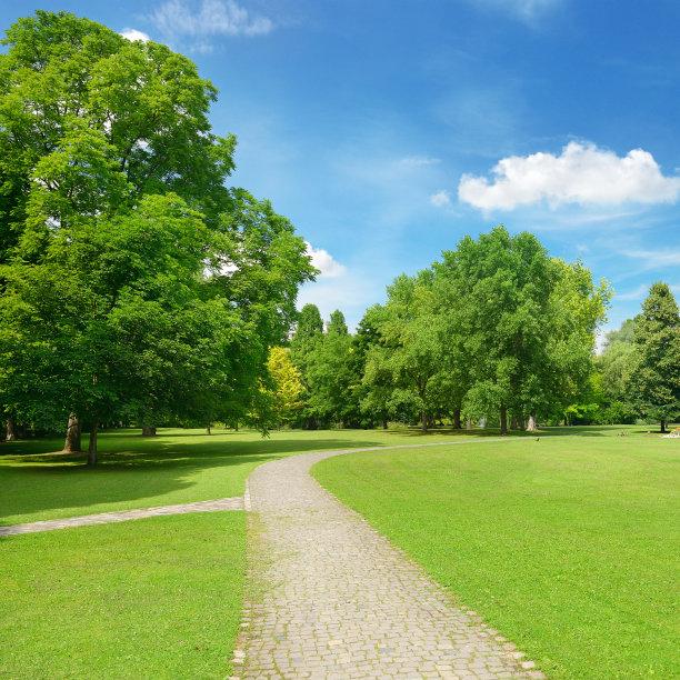 草地,自然美,派克大街