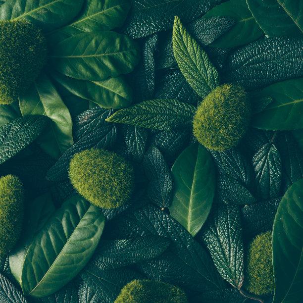 叶子绿色图片