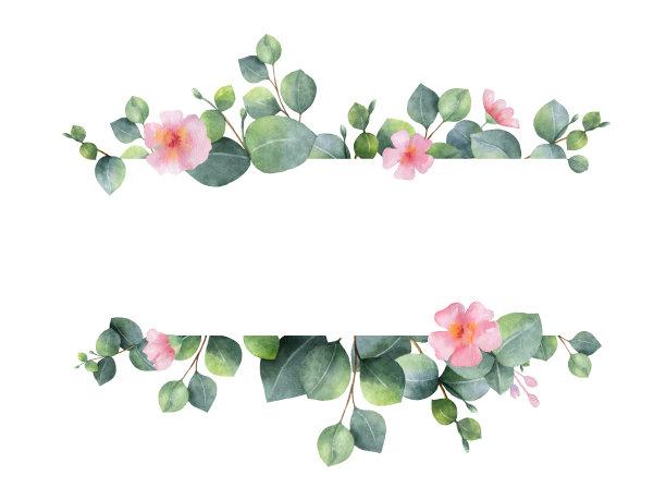 桉树绿色粉色
