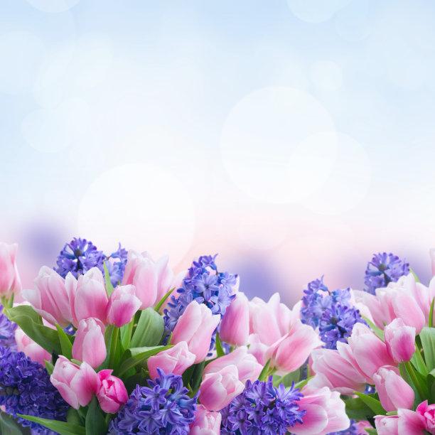 郁金香和风信子