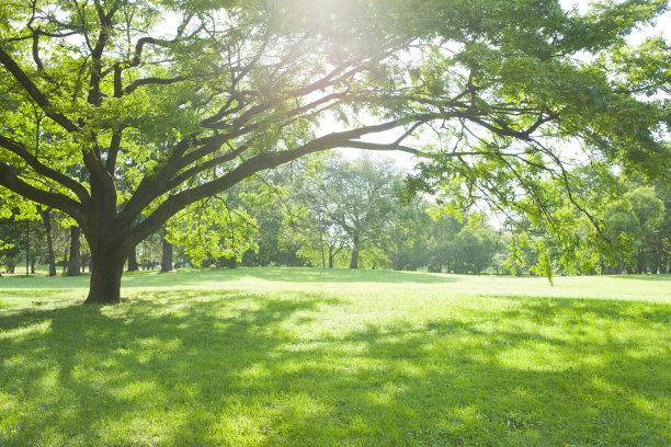 公园日光图片