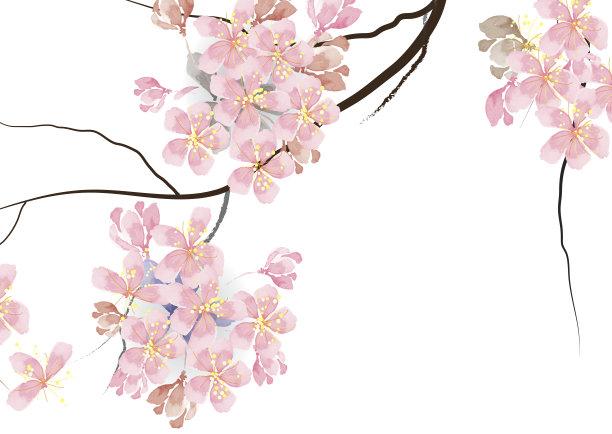 樱花枝粉色