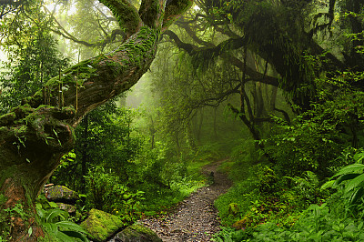 热带雨林尼泊尔雨林