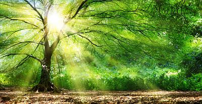 森林中照射的日光