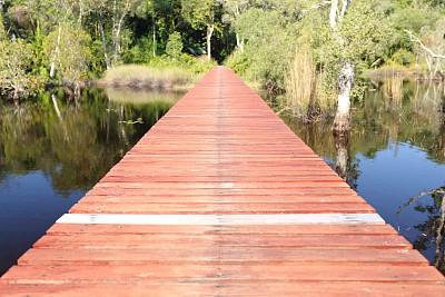 水,红杉,桥