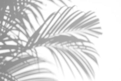棕榈叶阴影