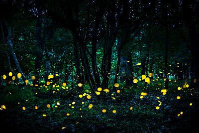 森林里的萤火虫