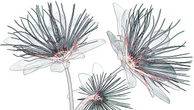 花卉x光片