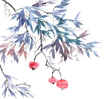 枝水果树苗