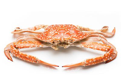 熟了的螃蟹