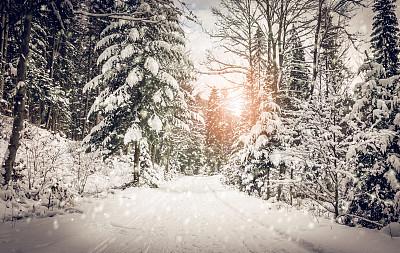 下了大雪的森林里的道路