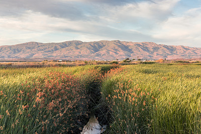 戴博洛山脉湿地湾区