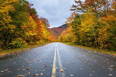 铺满落叶的马路