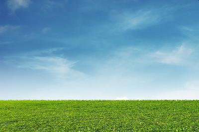 天空草白色