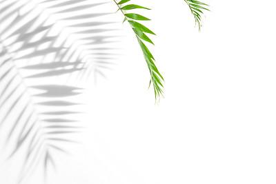 棕榈树阴影
