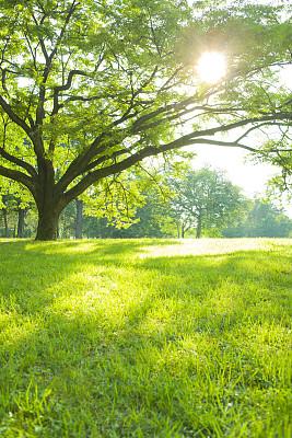 夏天绿色草地